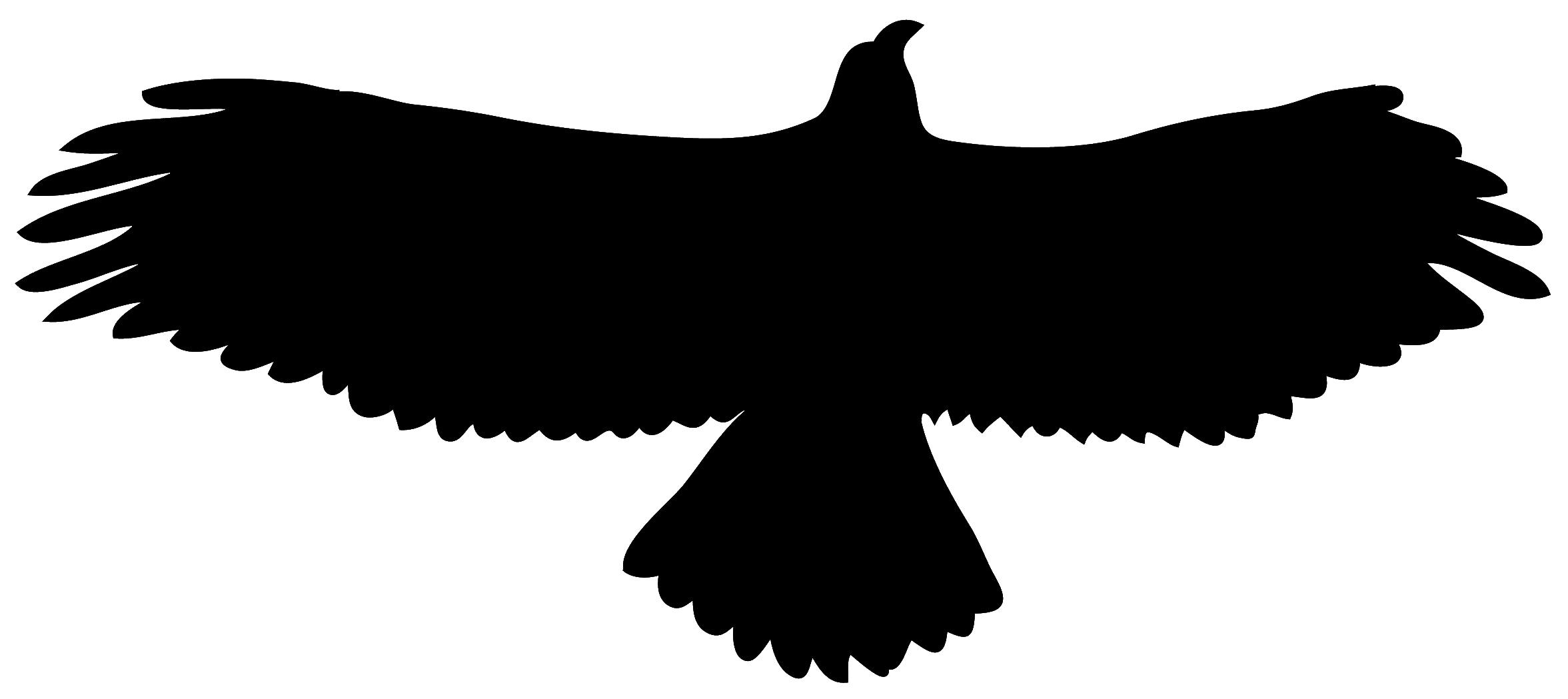 silhouette golden eagle in flight