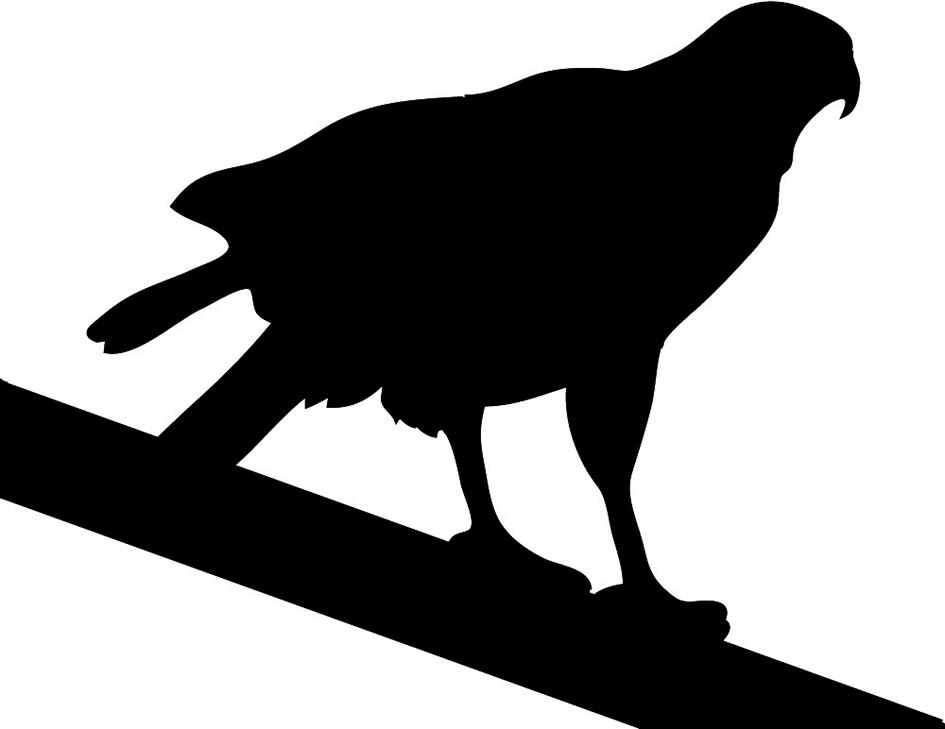 Hawk silhouette sitting on tree