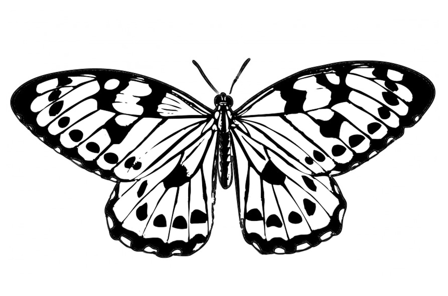 black and white image of butterfly