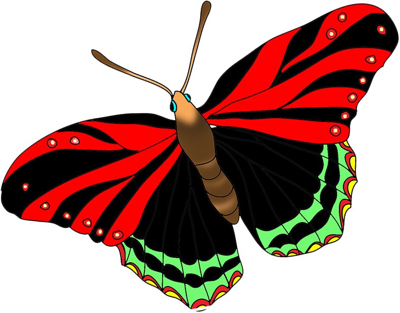 black red butterfly image