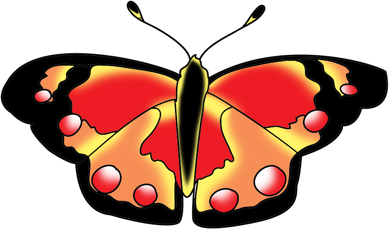 black red and orange butterfly