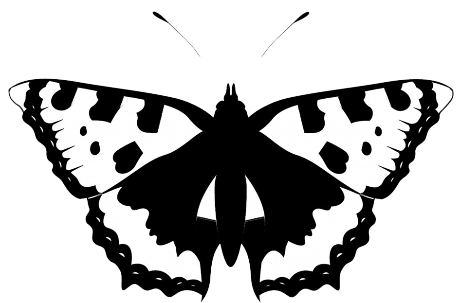 black white butterfly silhouette