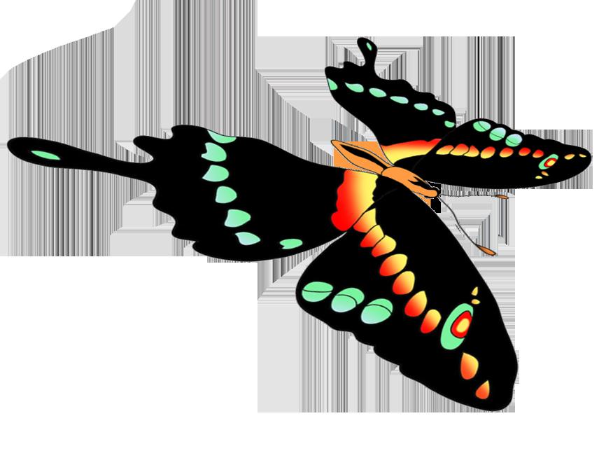 black swallowtail flying