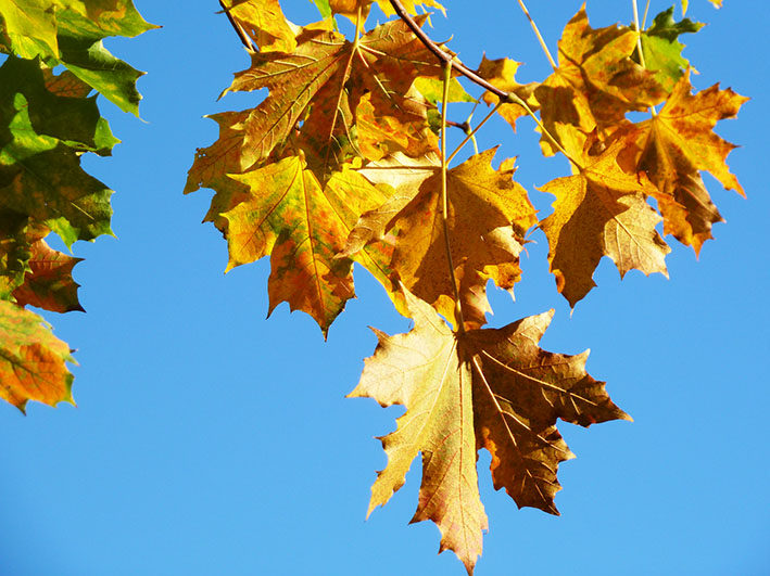blue sky with fall leaves