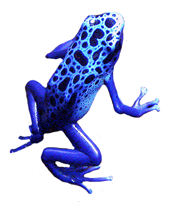 picture of blue frog