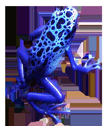 blue frog clip art