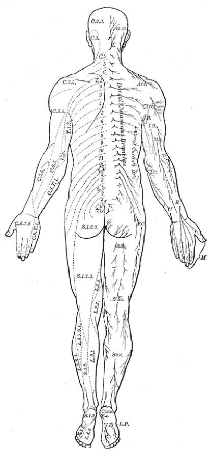 Human Body Diagram Medical Clipart