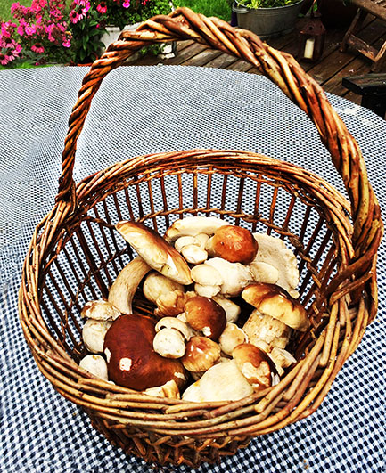 fall picture of boletes in basket