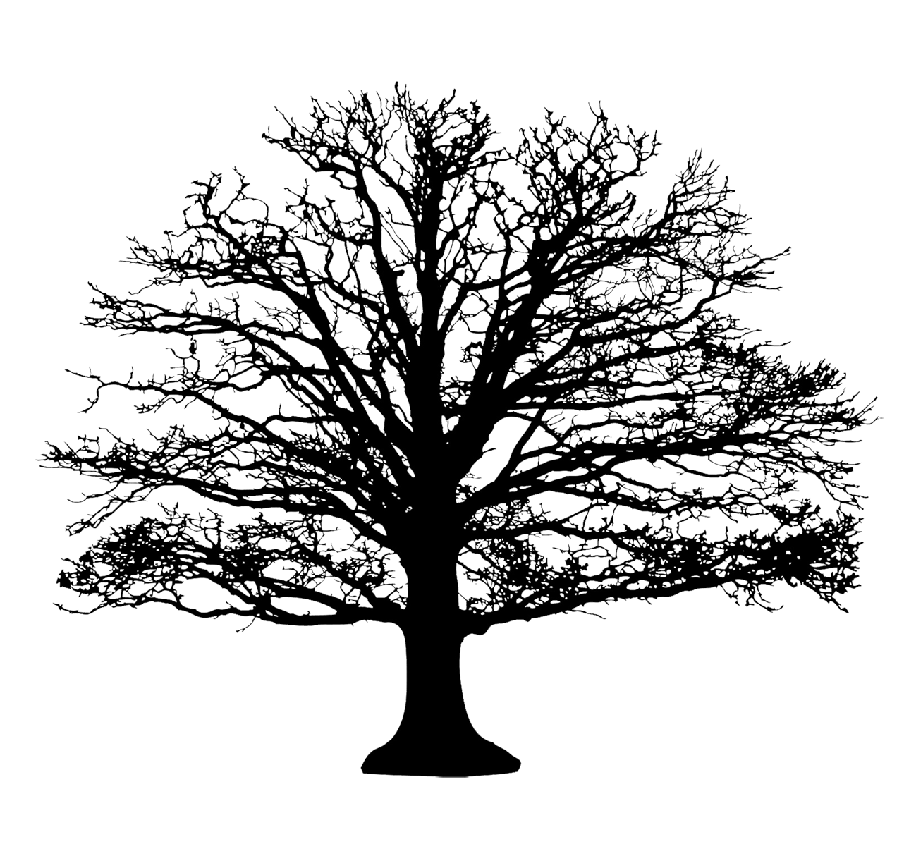 broad tree silhouette