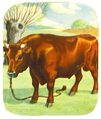 bull vintage scrap