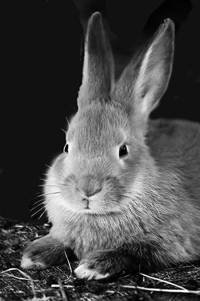 photo of bunny