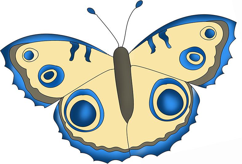 blue-beige-butterfly