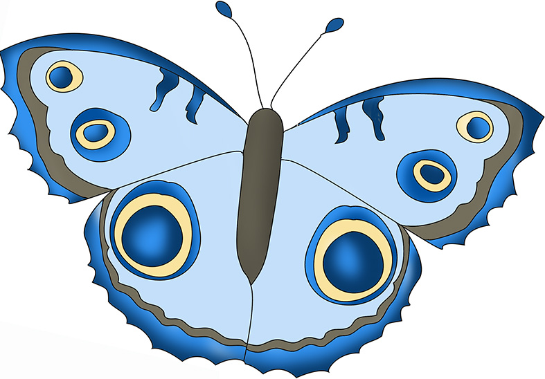 blue shaded butterfly