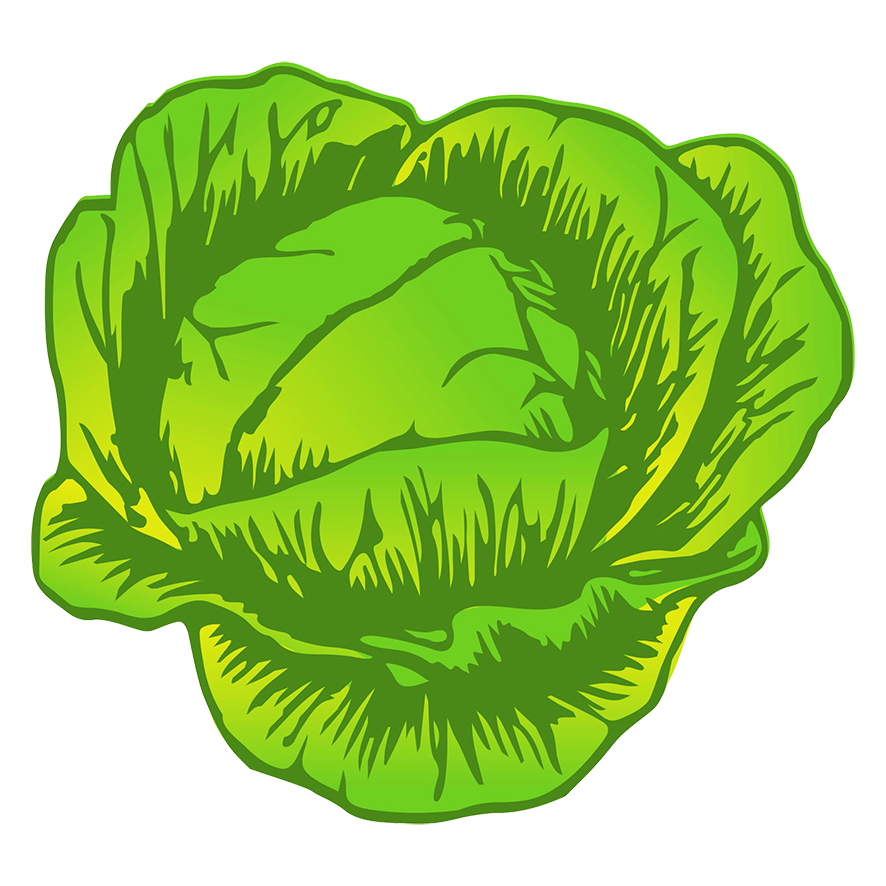 cabbage drawing