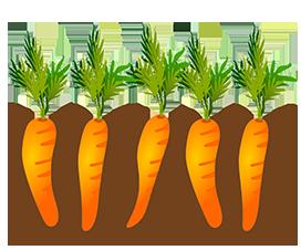 carrot garden bed
