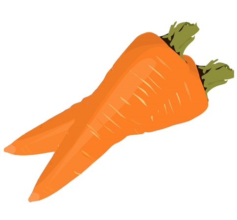 two carrots clipart