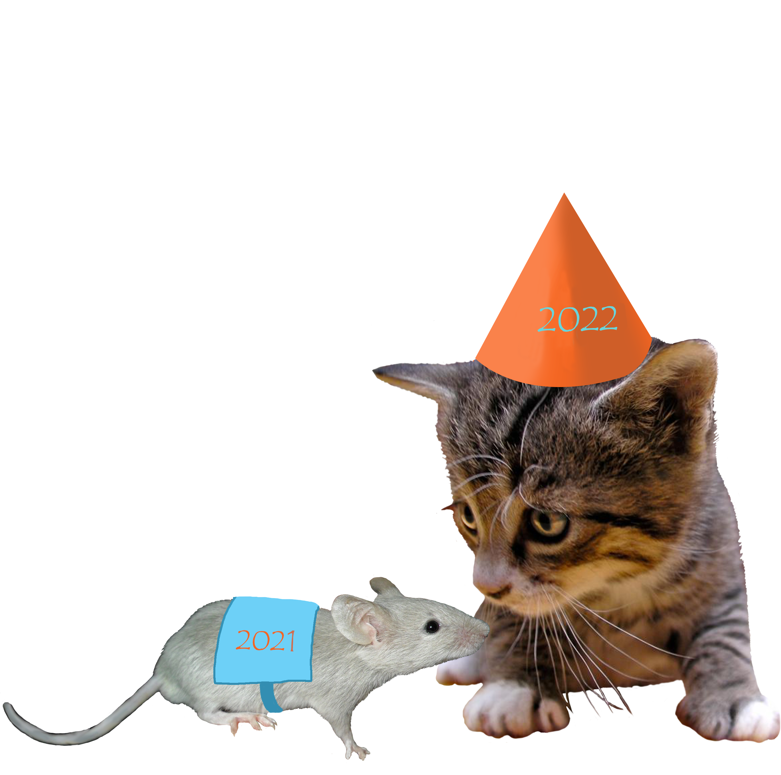 2017 cat and 2016 mouse