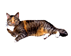 lying cat tumle clip art