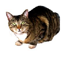cat clip art pepe looking at me