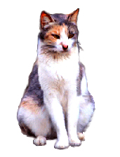 cat clip art sitting cat