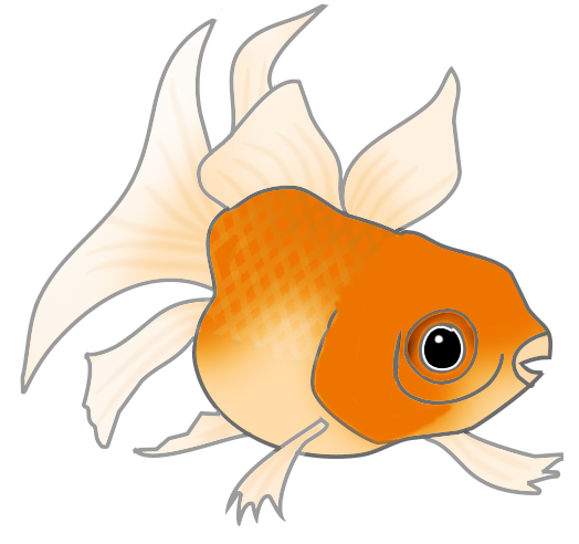 orange cat fish