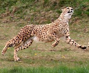 gepart hunting