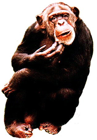chimpanse graphic