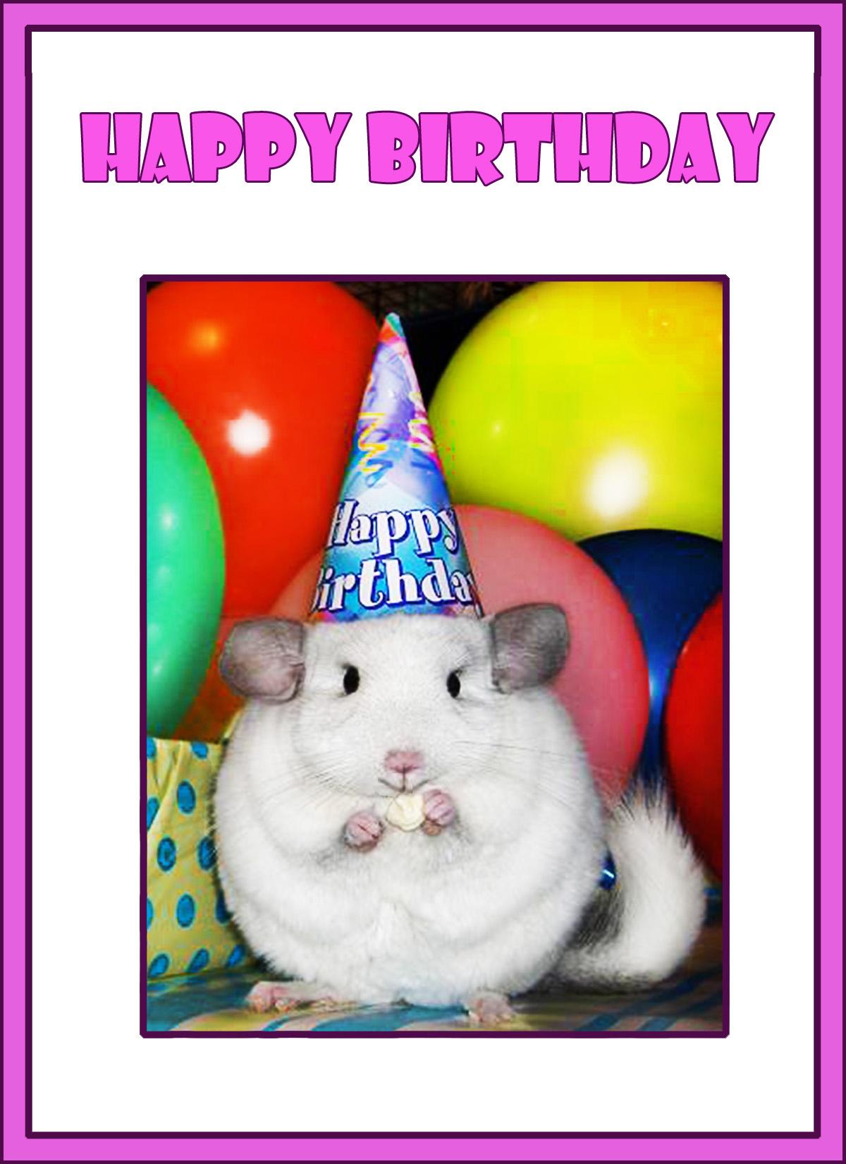 first birthday card chinchilla