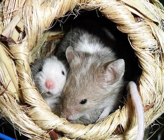 two little mice picture