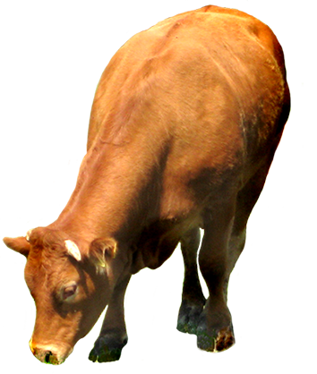 clip art of brown cow