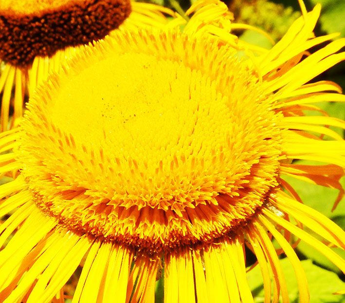 close up photo yellow flower