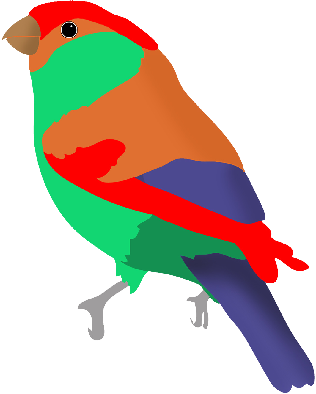 Birds colorful. Drawings of