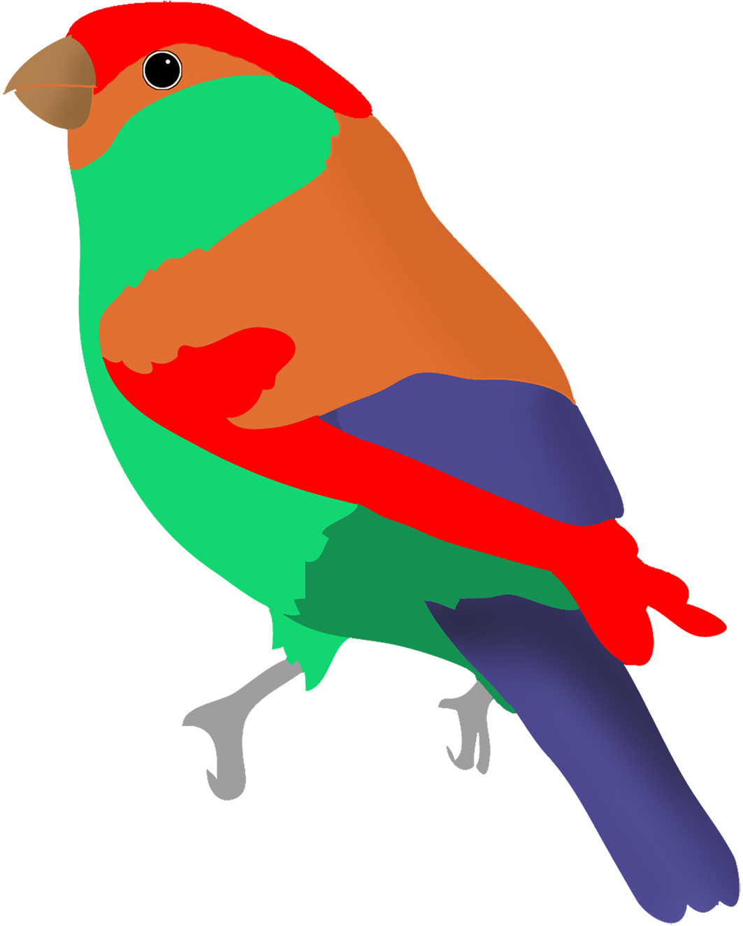 colorful-bird-red-green-blue