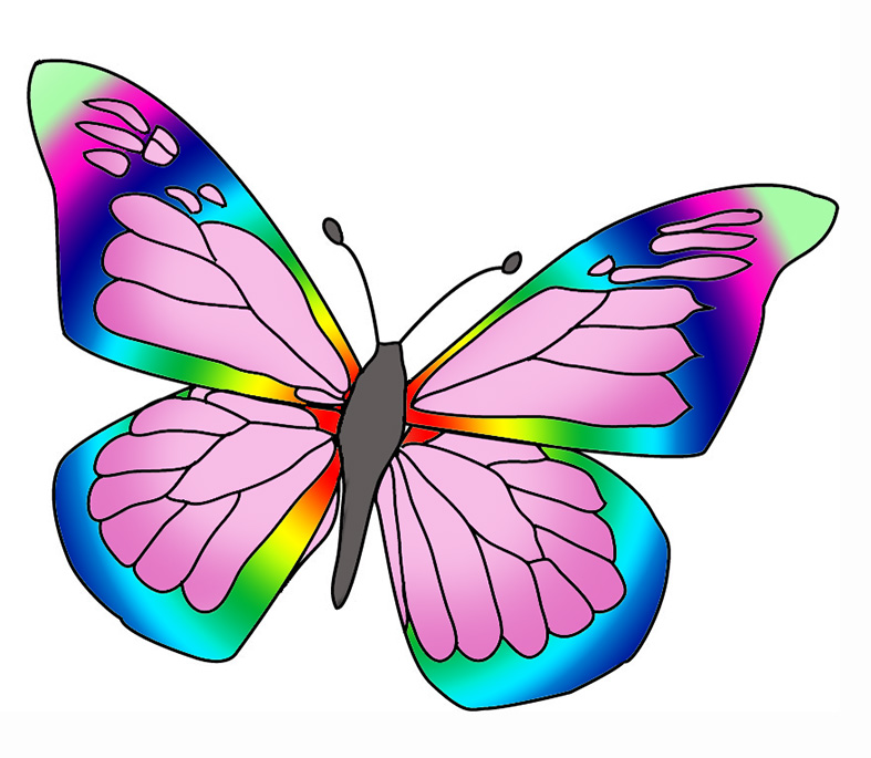 Butterfly Drawings With Color Pink Many colored butterfly