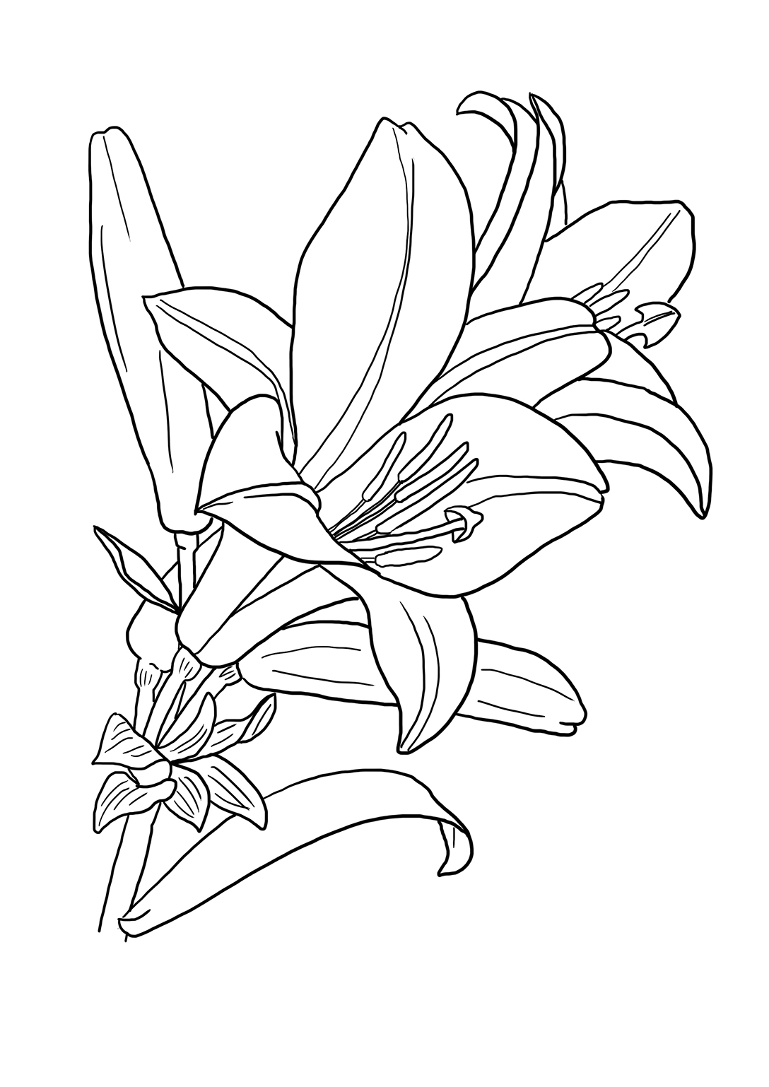 coloring sheet flower heads