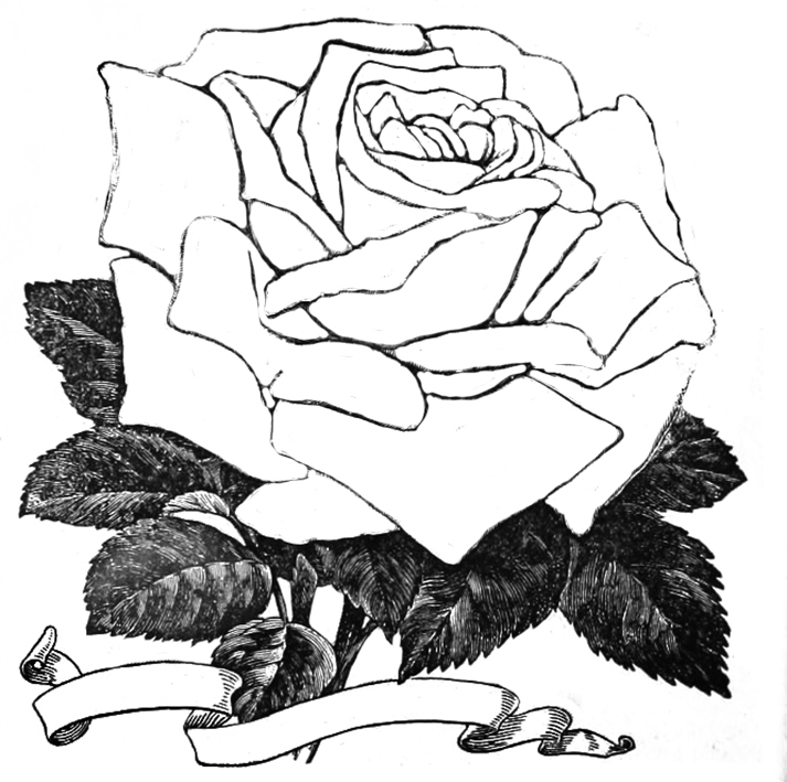 rose sketch to color