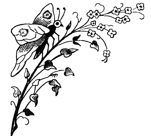 corner drawing butterfly flowers