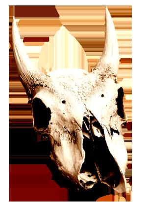 cow skull clip art