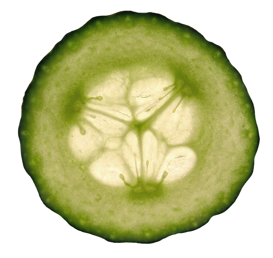 cucumber slice clipart