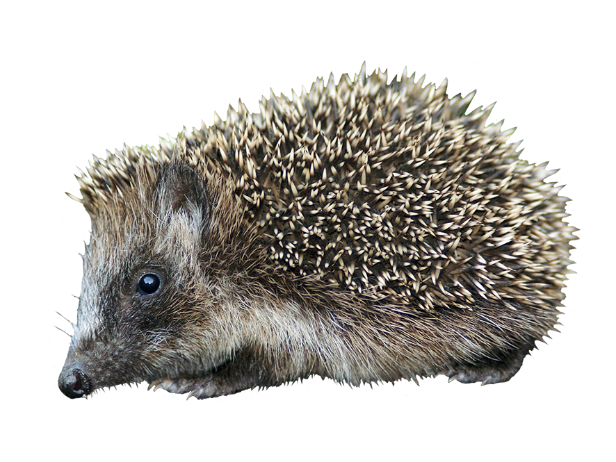 cut-out hedgehog clipart