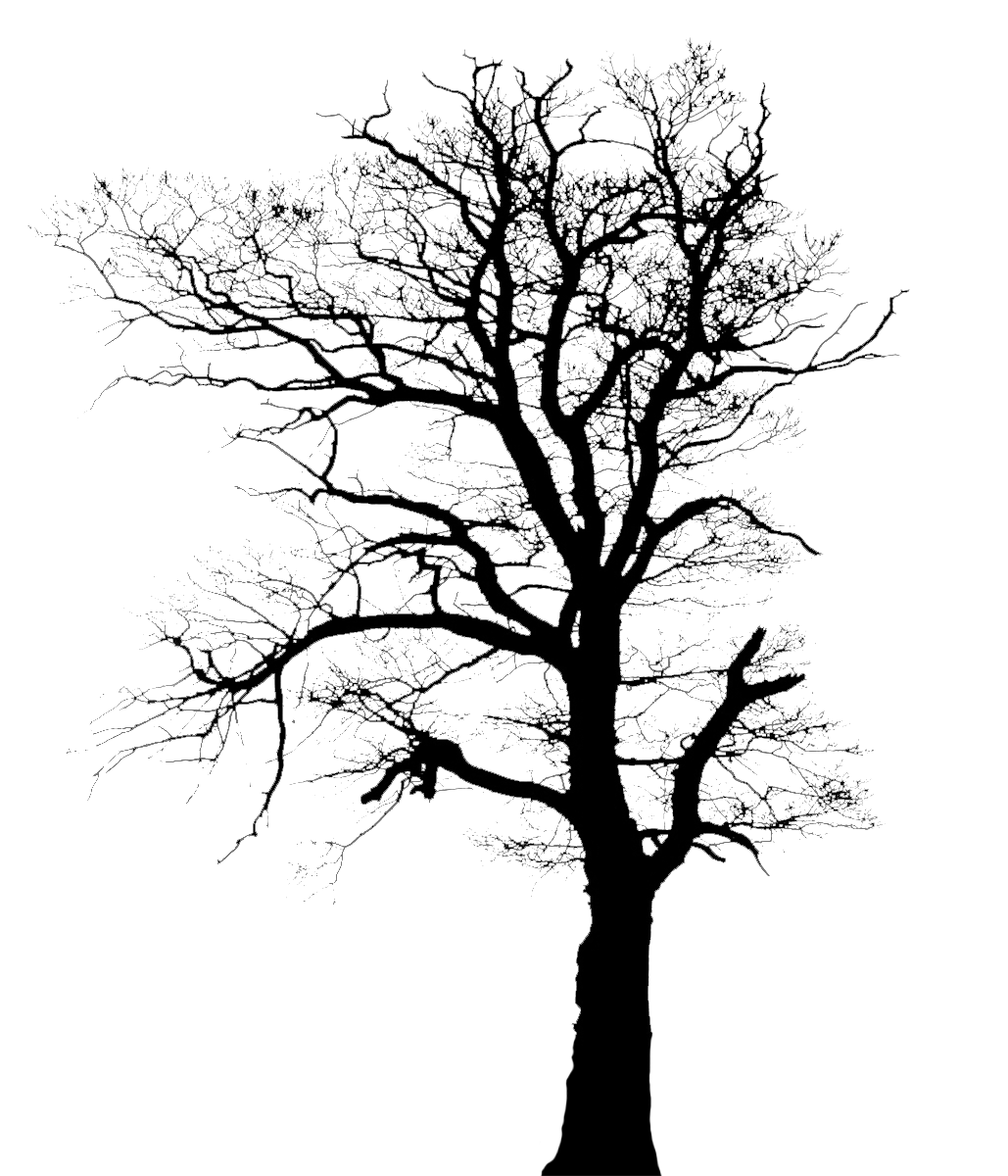 tree silhouette without leaves
