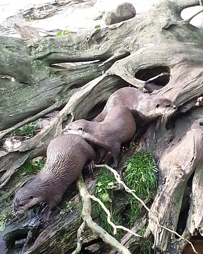 decorative otters