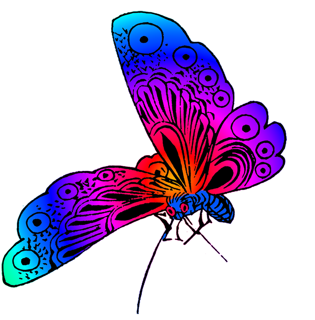 beautiful butterfly image