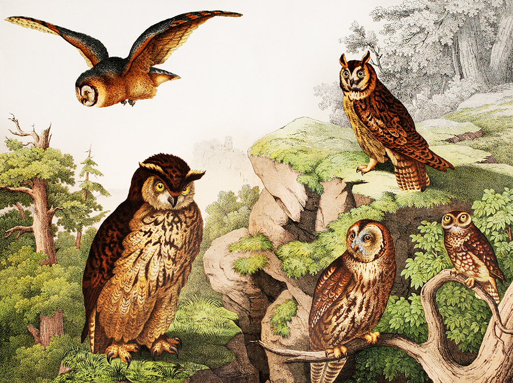 picture of owls different kinds