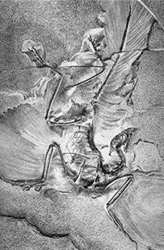 archeopteryx fossil