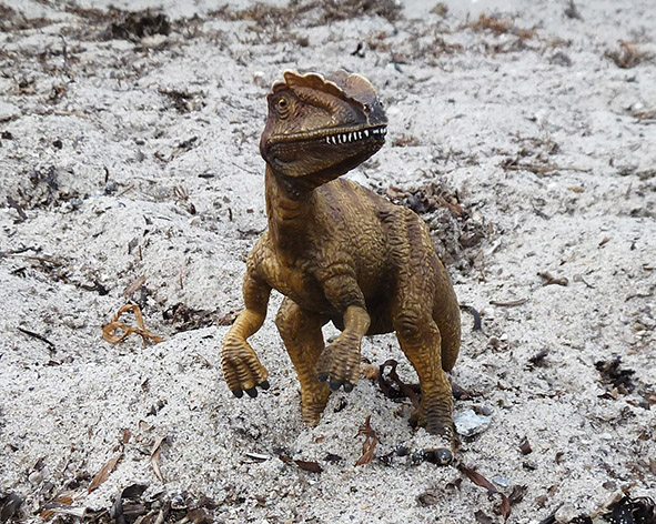 Deinonychus standing on sand