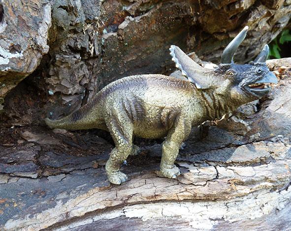 Triceraptos dinosaur