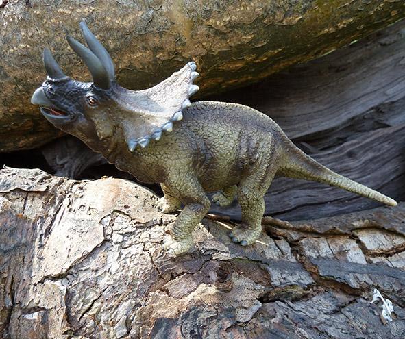 Triceraptos dinosaurus