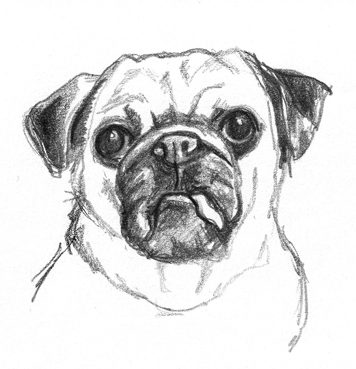 Dog sketch head with tongue out