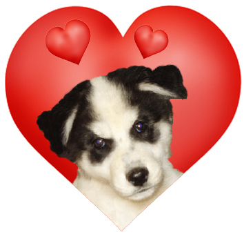 puppy in a Valentine heart